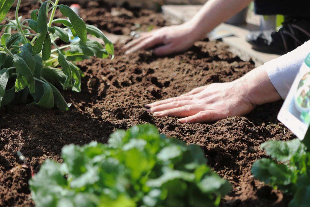 Como-lucir-el-mejor-jardin