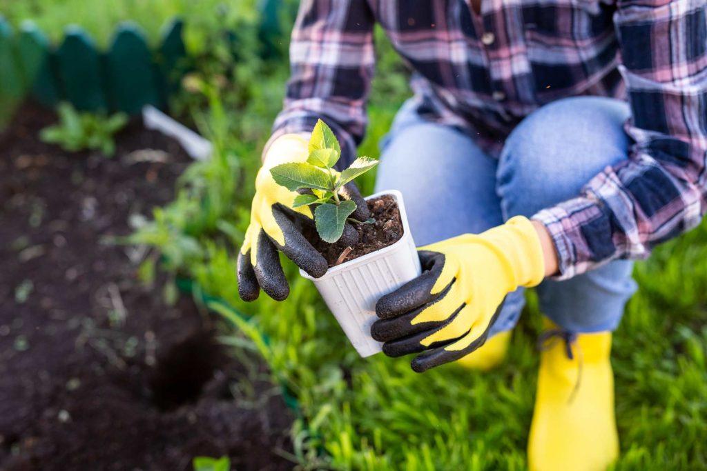 Recomendaciones para el Cuidado de las Plantas en Abril